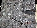 Specularite (high-grade iron ore) (Soudan Iron-Formation, Neoarchean, ~2.69 Ga; Soudan Mine, Soudan, Minnesota, USA) 17 (18411127373).jpg