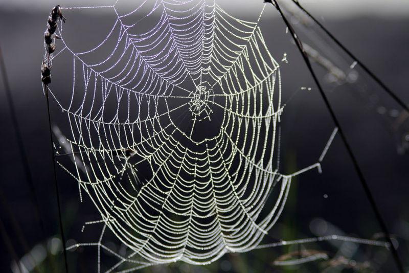 Material so reißfest wie Spinnennetze ist der Traum  Quelle: Wikipedia GNU-Lizenz für freie Dokumentation