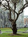 St. Patrick - panoramio (1).jpg