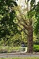 St. Stephen's Green, Dublin (507071) (32485684886).jpg