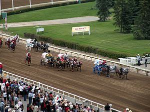 Chuckwagon racing - Chuckwagons racing toward the finish line at the 2009 Calgary Stampede