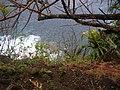 Starr-050405-5899-Schinus terebinthifolius-habit-Keopuka-Maui (24116173703).jpg
