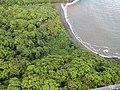 Starr-141014-2224-Hibiscus tiliaceus-aerial view-Kakipi Gulch Haiku-Maui (25154100161).jpg