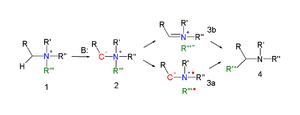 Stevens rearrangement - Stevens rearrangement reaction mechanism