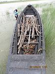 Still boat in Chars of Jamuna river at Bogra 13.jpg