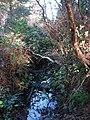 Stream beside the path - geograph.org.uk - 650299.jpg