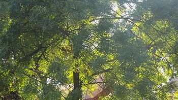 Sunlight piercing from the top of a tree.jpg