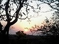 Sunrise at Pachmarhi.jpg