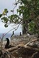 Surveillance des nids à Nukufotu (Wallis).jpg