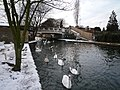 Swans and the Wolf Bridge - geograph.org.uk - 1165215.jpg