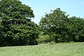 Swimbridge, field by the edge of a wood - geograph.org.uk - 441949.jpg