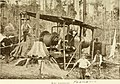Tasmanian forestry - timber products and sawmilling industry, a description of timber trees indigenous to Tasmania, their commercial value and process of manufacture, with methods adopted by the (14595544320).jpg
