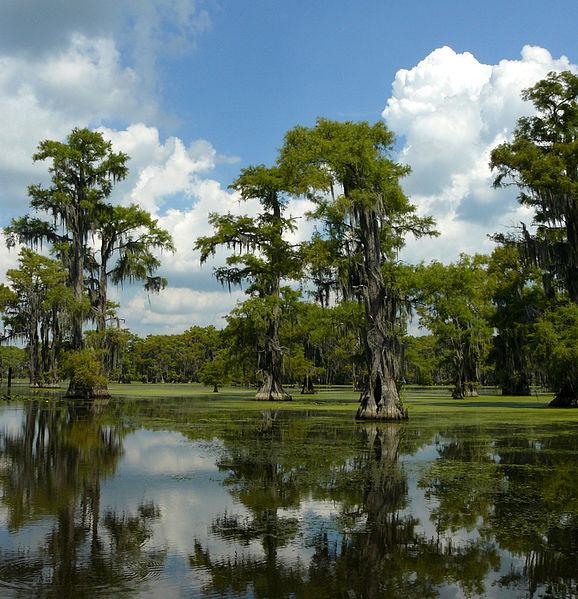 File taxodium distichum caddo lake tx for Caddo lake fishing report