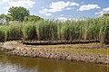 Technisch-biologische Ufersicherung an der Wümme, Versuchsstrecke 3 (50677954963).jpg