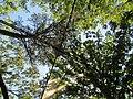 Tent Sky View Parkers Creek Jordan Lake NC SP 3828 (36009146951).jpg