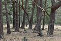Teverener Heide 3.jpg