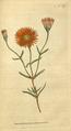 The Botanical Magazine, Plate 59 (Volume 2, 1788).png