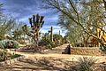 The Cactus Garden of the Springs Preserve.jpg