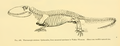 The Osteology of the Reptiles-250 sdfgfdfgfd dgfdd.png