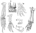 The Osteology of the Reptiles p172.png