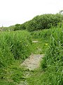 The Ted Ellis Nature Reserve - path through Old Mill Marsh - geograph.org.uk - 1341559.jpg