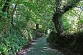 The way to Polwheveral (2778231037).jpg