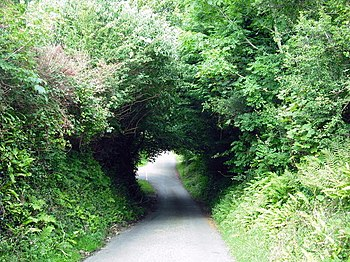 English: Those Pembrokeshire lanes Tunnel visi...