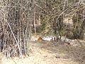 Tiger image24.jpg