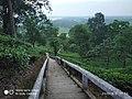Tipam Deosali Hills.jpg