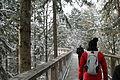 Touristen Bayerischer Wald Baumwipfelpfad 2013.JPG