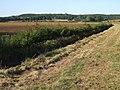 Track near Langton by Spilsby - geograph.org.uk - 554674.jpg