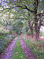 Track to Corry Lodge - geograph.org.uk - 992298.jpg