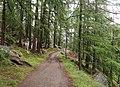 Trail in forest, Zermatt.jpg