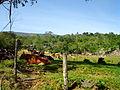 Tramo la Pionía - Cascada del Vino, Edo. Lara.JPG