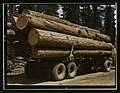 Truck load of ponderosa pine, Edward Hines Lumber Co. operations in Malheur National Forest, Grant County, Oregon LCCN2017877600.jpg
