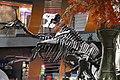 Tsintaosaurus spinorhinus & Tyrannosaurus Rex.jpg