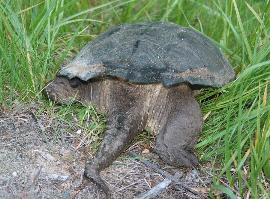 Turtle-back-galawebdesign