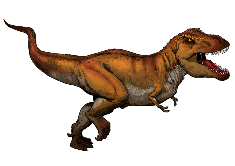 What the fuck does a T-Rex do with his little retarded baby hands? 800px-Tyrannosaurus_Rex_colored