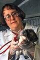 USDA-ARS Guinea Pig.jpg