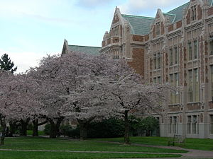 U Wash Quad cherry blossoms 02.jpg