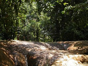 Climate of Indonesia - Ujung Kulon National Park, Banten