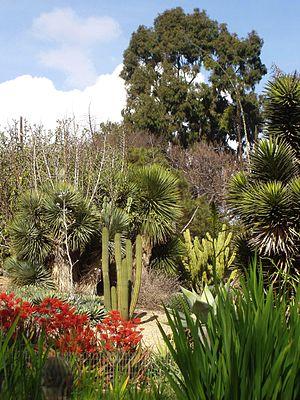 UCI Arboretum - General view of the University of California, Irvine, Arboretum.