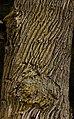 Unterhölzer Wald-3511.jpg