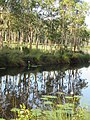 Urunga Wetlands.jpg