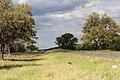 Vägen till Etosha-2119 - Flickr - Ragnhild & Neil Crawford.jpg