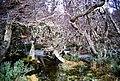 Vegetación indómita - panoramio.jpg