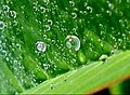 Vegetal e água.jpg