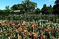 Villa Taranto - Dahliengarten.jpg