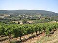 Vineyard in San Gimignano - panoramio.jpg