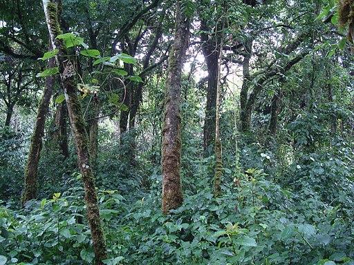 Virunga National Park-119502